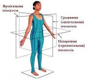 Оси и плоскости тела человека